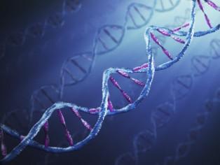 Estudando e Compreendendo a Segunda Lei de Mendel (Genética)