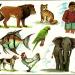 Entenda o Que São Cladística e Grupos Ancestrais