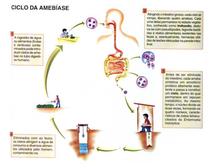amebiase_ciclo