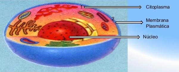 citoplasma_celular