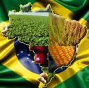 Geografia no Enem: Um Panorama da Agropecuária Brasileira