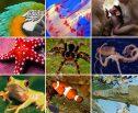 Revisão Geral Sobre o Reino Animalia, Animal ou Metazoa