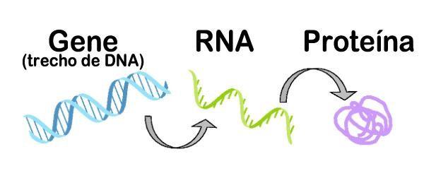 Conceitos Básicos Para a Compreensão da Genética